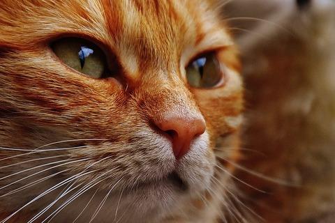 cat-1678009_640