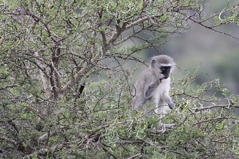 south-africa-3529646_640
