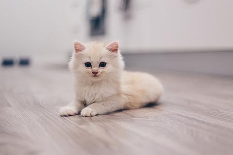 cat-2866339_640
