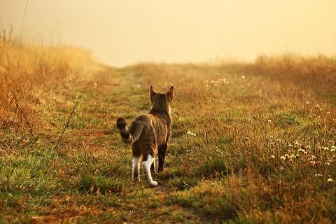 cat-1657357_640
