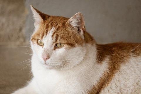 cat-5091286_640