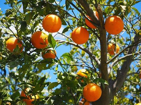 oranges-1117628_640