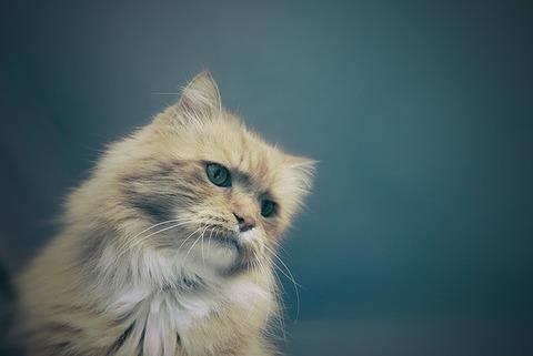 cat-1245963_640