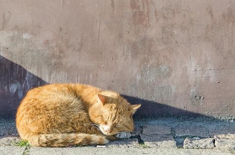 cat-4100750_640