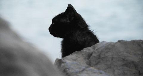 cat-691121_640