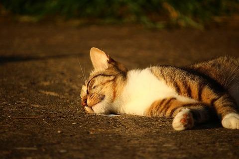 cat-1482291_640