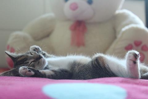 kitten-3848683_640