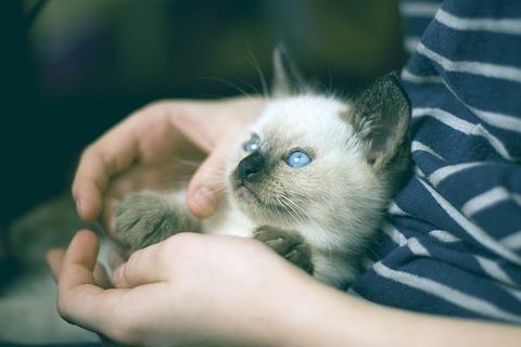 kitten-882058_640
