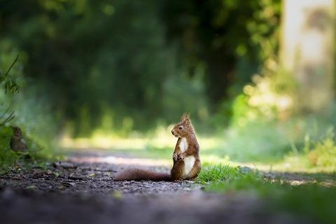 squirrel-4515962_640