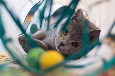 cat-3009448_640