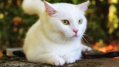 cat-4743502_640
