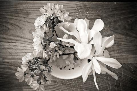 magnolia-2191012_640