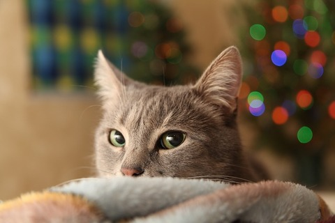 christmas-tree-3805104_640
