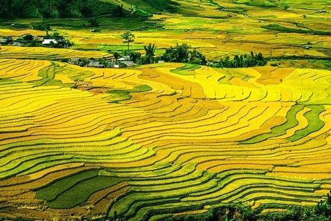 rice-terraces-214725_640