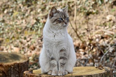 cat-4246491_640