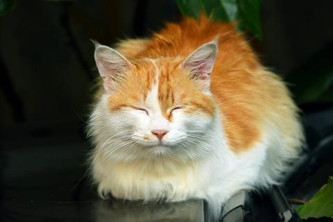 cat-2703140_640