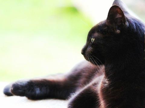 cat-3397670_640