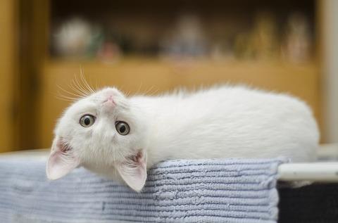 kitten-1285341_640