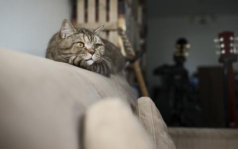 【動画】初めてソファーに登れた猫がかわいいと話題!反応まとめ
