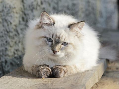 cat-2459854_640