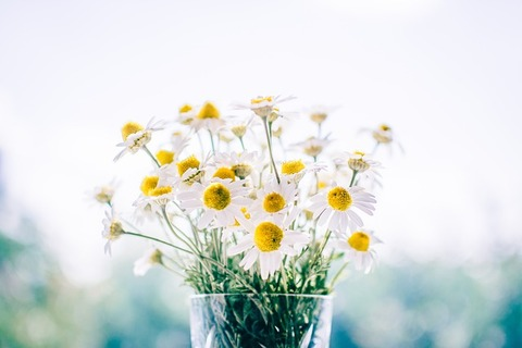 flowers-983897_640