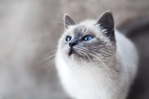 cat-2571970_640