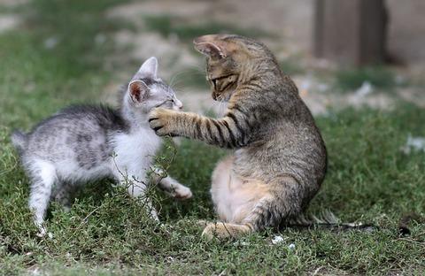 cat-3649482_640