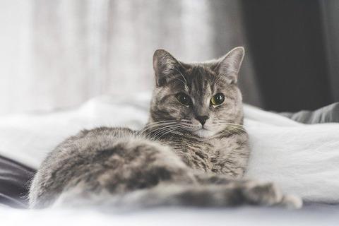 cat-2591152_640