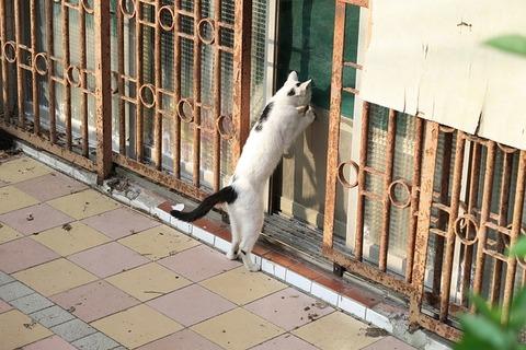 cat-3409000_640