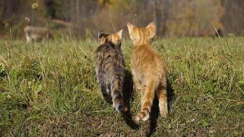 cat-2943013_640