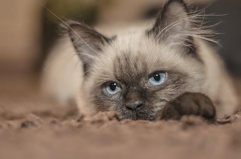 cat-1613088_640