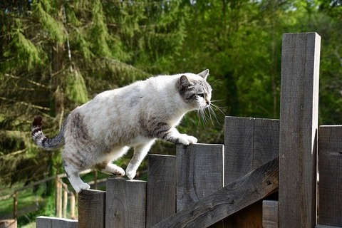 cat-5105297_640