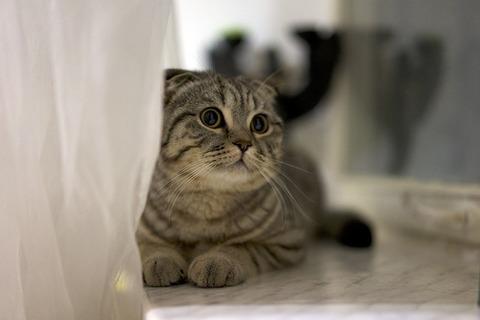 cat-438477_640