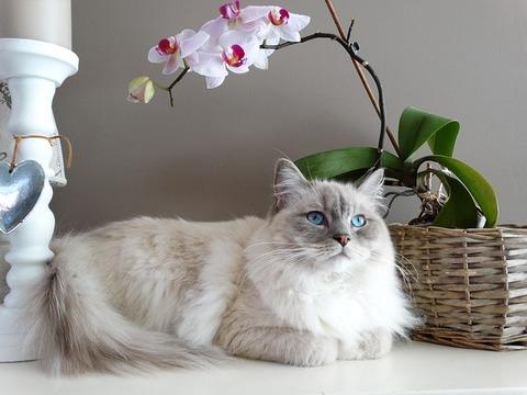 cat-1726023_640