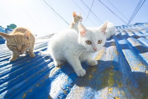 cat-3858238_640