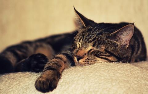 kitten-2874486_640 (1)