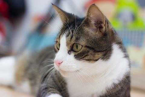 cat-4078090_640