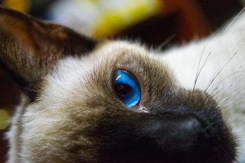 cat-4132016_640