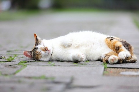 cat-5752497_640
