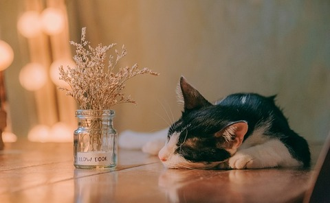 cat-3700198_640