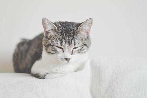 cat-1870003_640