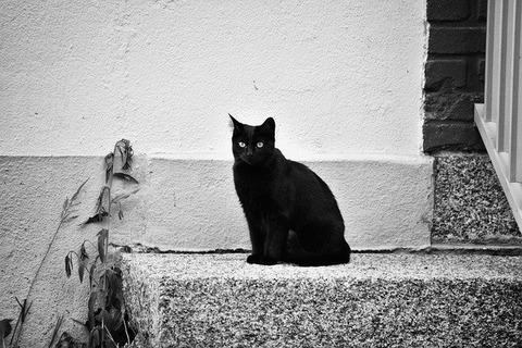cat-1889650_640 (1)