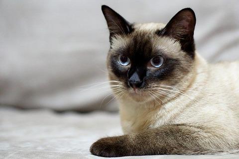cat-2065600_640