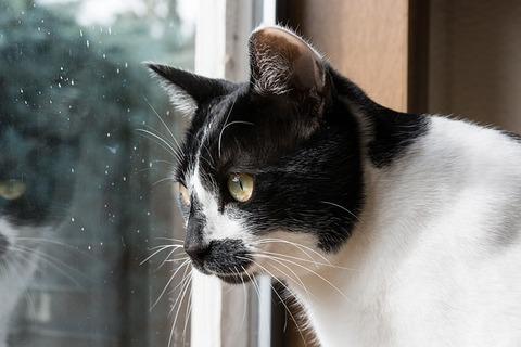 cat-3229942_640