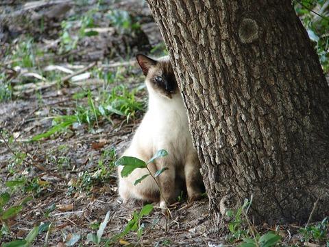 cat-672271_640