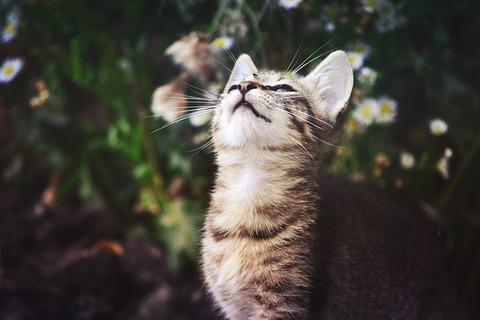 cat-907507_640