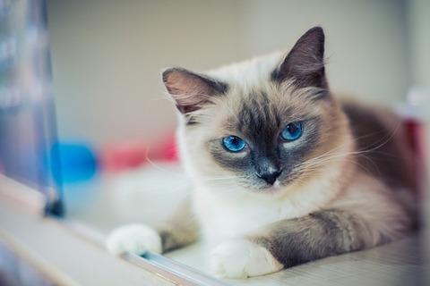 kitty-2602118_640