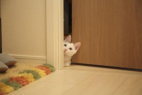 cat-2573570_640
