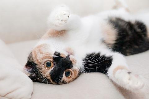 cat-649164_640 (2)