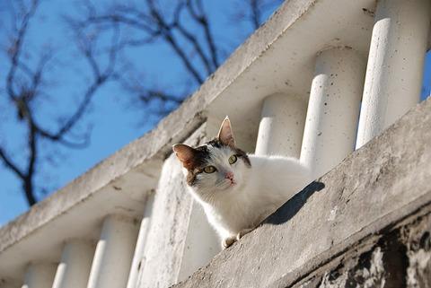 cat-1232940_640